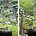 金剛寺(河内長野市)庭園