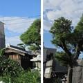 感田神社(貝塚市)表神門