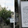 感田神社(貝塚市)拝殿