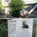 Photos: 貝塚御坊 願泉寺跡(大阪府貝塚市)卜半役所跡・姫松