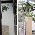 Photos: 紀州街道(大阪府岸和田市)本町一里塚・弁財天