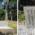 Photos: 武野紹鴎像(堺市営 大仙公園。堺区)