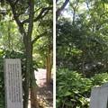 千利休像(堺市営 大仙公園。堺区)