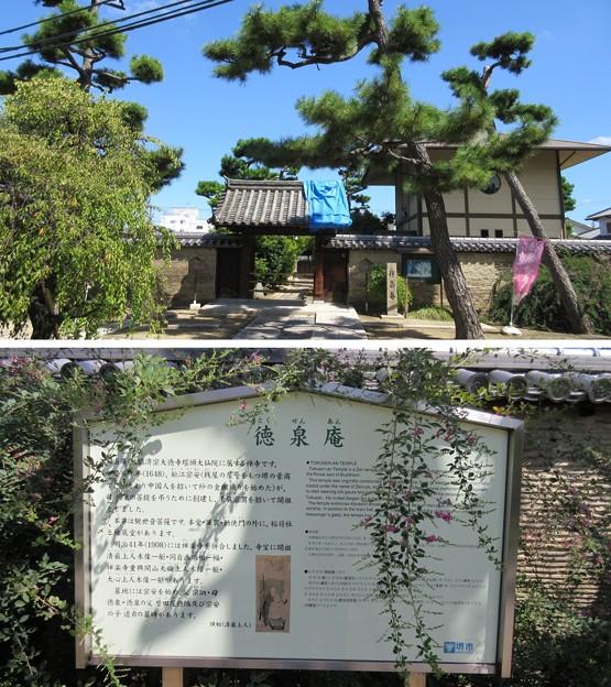 南宗寺(堺市堺区)徳泉庵