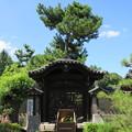 Photos: 南宗寺(堺市堺区)唐門