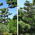 Photos: 南宗寺(堺市堺区)仏殿