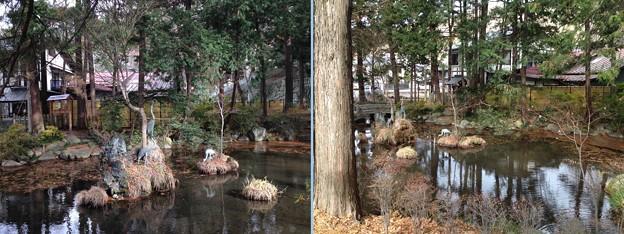 Photos: 諏訪大社 下社秋宮(下諏訪町)千尋池