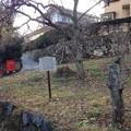 Photos: 13.12.12.諏訪大社 上社前宮(茅野市)神子屋跡