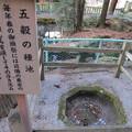 Photos: 諏訪大社 上社本宮(諏訪市)五穀の種池
