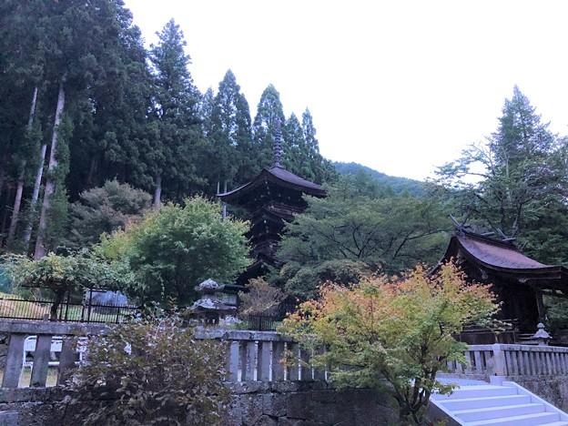 Photos: 新海三社神社(佐久市)三重塔・東本社