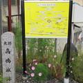 Photos: 高島古城(諏訪市)