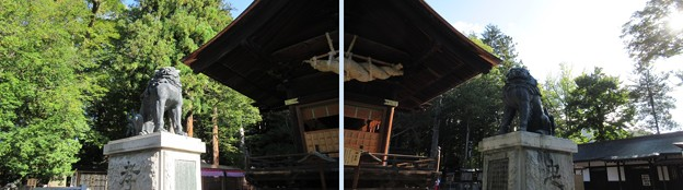 下社 秋宮(下諏訪町)神楽殿狛犬