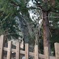 Photos: 13.12.12.上社 前宮(茅野市宮川)神陵伝承地