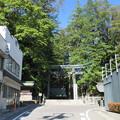Photos: 上社 本宮(諏訪市中洲)東参道鳥居