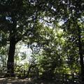 Photos: 11.01.31.氷川女体神社(見沼区)磐船祭祭祀遺跡