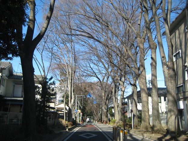Photos: 11.01.31.氷川神社(大宮区)参道