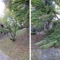 二本松城(福島県二本松市)洗心亭背後