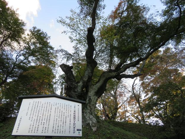 二本松城(福島県二本松市)イロハカエデ