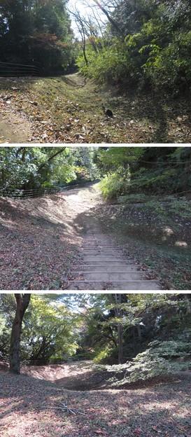 Photos: 大田原城 北の丸跡(大田原市)横堀?