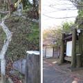 Photos: 黒羽城 会所(大田原市)土塁
