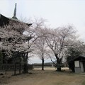 Photos: 13.03.23.西福寺(川口市)駐車場より