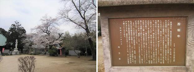 西福寺(川口市)境内