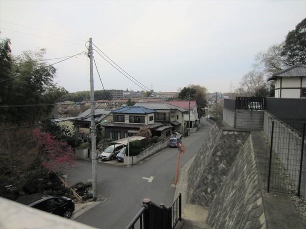 西福寺(川口市)より西向き、赤山陣屋外堀跡・(前方)出丸