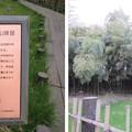 赤山陣屋跡(川口市)西堀