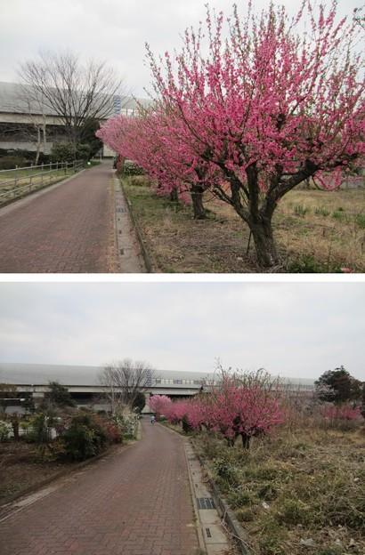 13.03.23.赤山陣屋跡(川口市)本郭
