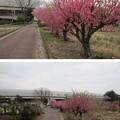 Photos: 13.03.23.赤山陣屋跡(川口市)本郭