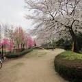 Photos: 13.03.23.赤山陣屋跡(川口市)