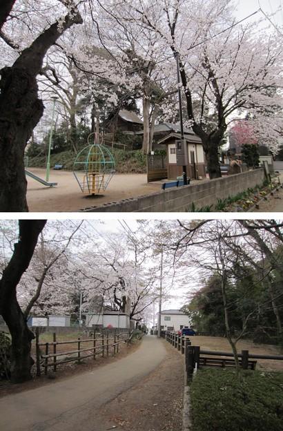 Photos: 13.03.23.山王三社旧境内(川口市)