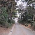 13.03.23.金剛寺(川口市)参道