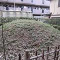 Photos: 金剛寺(川口市)経塚