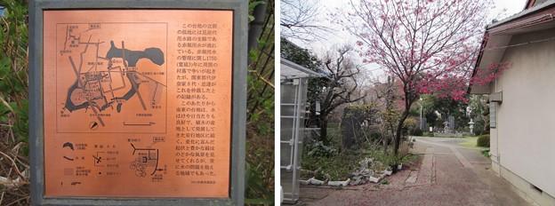 Photos: 13.03.23.興禅院(川口市)