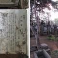 Photos: 興禅院(川口市)伊奈家譜代 富田氏墓所