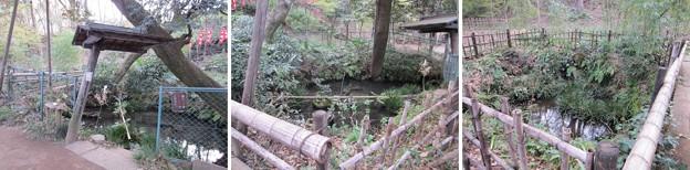 Photos: 興禅院(川口市)放生池