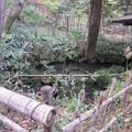 興禅院(川口市)放生池
