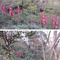 興禅院(川口市)
