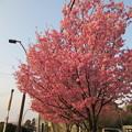 13.03.23.興禅院駐車場(川口市)