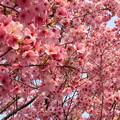 Photos: 13.03.23.興禅院駐車場(川口市)