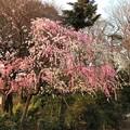 13.03.23.興禅院外周(川口市)