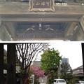 Photos: 錫杖寺(川口市)山門・境内