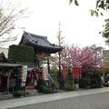 Photos: 13.04.10.錫杖寺(川口市)境内