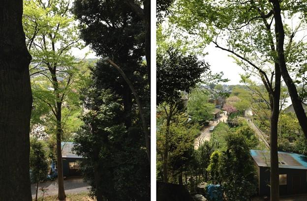 木曽呂の富士塚(川口市)下は見沼代用水