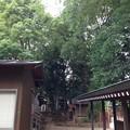 鳩ヶ谷氷川神社(川口市)摂末社