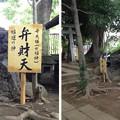 Photos: 鳩ヶ谷氷川神社(川口市)浅間・三峰・弁天