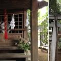 Photos: 鳩ヶ谷氷川神社(川口市)稲荷神社