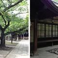Photos: 川口神社(埼玉県)社務所