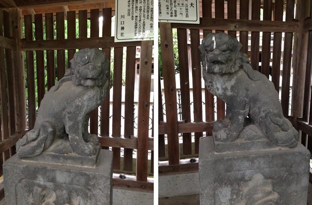 川口神社(埼玉県)狛犬